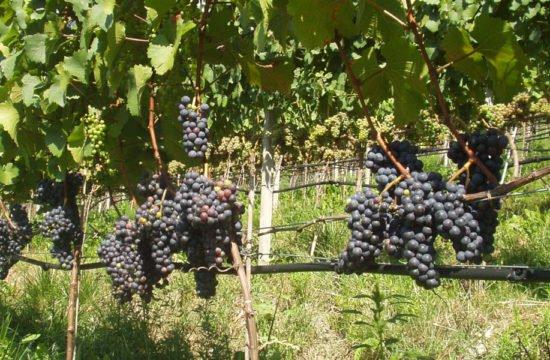 Felicitá in vacanza - Bressanone / Alto Adige (4)